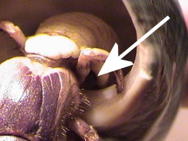 Hermit+crab+molting+pictures